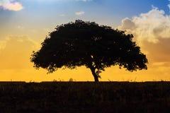 Coucher du soleil seul d'arbre Photo libre de droits