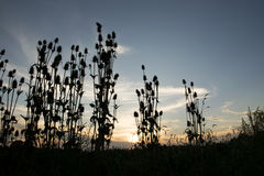 Coucher du soleil silhouetté Images stock