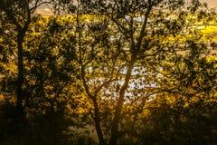Coucher du soleil silhouetté en bois antérieur, Crowhurst, le Sussex est, Angleterre image libre de droits