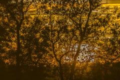 Coucher du soleil silhouetté en bois antérieur, Crowhurst, le Sussex est, Angleterre photos libres de droits