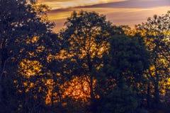 Coucher du soleil silhouetté en bois antérieur, Crowhurst, le Sussex est, Angleterre photos stock