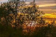 Coucher du soleil silhouetté en bois antérieur, Crowhurst, le Sussex est, Angleterre images stock