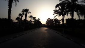 Coucher du soleil Siluet de palmier romantique photographie stock libre de droits