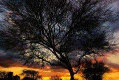 Coucher du soleil stupéfiant, arbre silhouetté photographie stock libre de droits