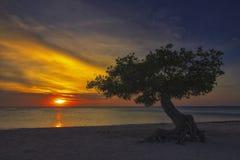 Coucher du soleil sur Aruba avec l'arbre de Divi Divi Image libre de droits
