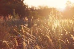 Coucher du soleil sur des chardons d'un pré Photographie stock libre de droits