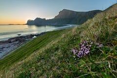 Coucher du soleil sur la côte avec des fleurs sur le premier plan Photo libre de droits