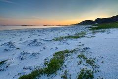 Coucher du soleil sur la plage avec l'herbe verte sur le premier plan Photo stock