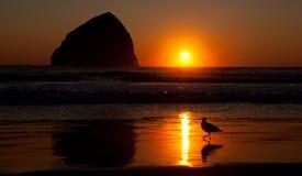 Coucher du soleil sur la plage avec l'oiseau Photographie stock