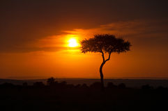 Coucher du soleil sur la savane Image libre de droits