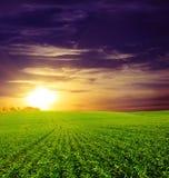 Coucher du soleil sur la zone verte du blé, du ciel bleu et du soleil, nuages blancs. le pays des merveilles Images stock