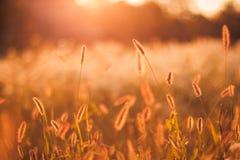 Coucher du soleil sur le champ Photos stock