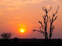 Coucher du soleil sur le fleuve de Zambezi, Afrique. Photo stock