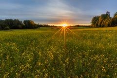 Coucher du soleil sur le gisement de graine de colza Photos stock