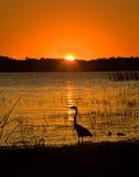 Coucher du soleil sur le lac avec le héron Photo stock