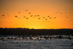 Coucher du soleil sur le tinctorial Island Photos stock