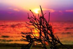 coucher du soleil sur les déchets secs de plastique de palmier de branche de mer sur la plage Images libres de droits