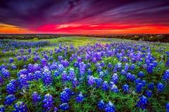 Coucher du soleil sur Sugar Ridge Road, Ennis, TX Images libres de droits