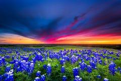 Coucher du soleil sur Sugar Ridge Road, Ennis, TX Photographie stock