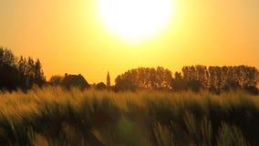 Coucher du soleil sur un champ de blé banque de vidéos