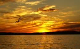 Coucher du soleil sur un lac et la silhouette de la mouette Images stock