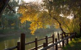 Coucher du soleil sur un passage couvert en parc Photographie stock libre de droits