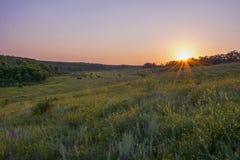 Coucher du soleil sur une clairière Images libres de droits