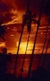 Coucher du soleil Tahiti de Palmtree images stock