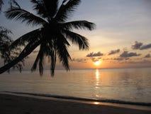 Coucher du soleil thaï avec la paume Photos stock