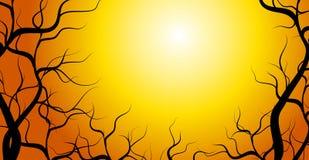 Coucher du soleil tordu de branchements d'arbre Photographie stock