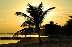 Coucher du soleil tropical Photos stock