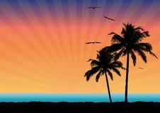 Coucher du soleil tropical Illustration Stock