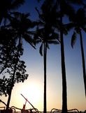 Coucher du soleil tropical avec des paumes en silhouette Image stock