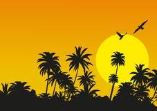 Coucher du soleil tropical avec des silhouettes des paumes Illustration Stock