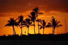 Coucher du soleil tropical d'or Photo libre de droits