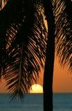 Coucher du soleil tropical de palmier en Hawaï Images libres de droits