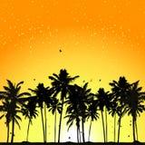 Coucher du soleil tropical, palmiers illustration de vecteur