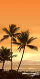 Coucher du soleil tropical (photo de graphisme) Images libres de droits