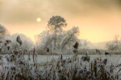 Coucher du soleil un jour brumeux d'hiver avec les arbres givrés Photographie stock libre de droits