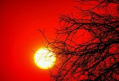 Coucher du soleil un jour du feu de brousse photos libres de droits