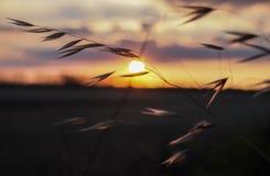 Coucher du soleil venteux Image libre de droits