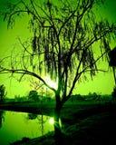 Coucher du soleil vert Photographie stock