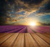 Coucher du soleil vibrant d'été au-dessus de paysage de gisement de lavande avec en bois Image stock