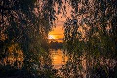 Coucher du soleil vibrant derrière des saules près d'un lac image stock