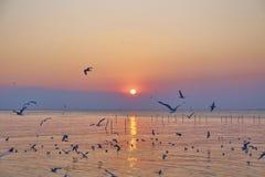 Couchers du soleil à la mer Photographie stock