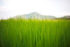 Couchers du soleil au champ de maïs Photographie stock