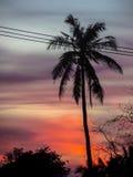 Couchers du soleil et noix de coco photographie stock libre de droits