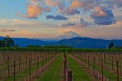 Couchers du soleil sur les vignes et le support Adams Image libre de droits