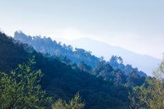 Couches de montagne de forêt Photo stock
