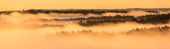 Couches, forêt et brouillard Photographie stock libre de droits